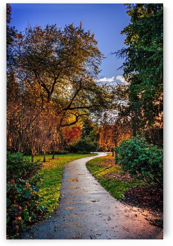 wet asphalt walkway between colorful bushes and trees in the park by Viktor Birkus
