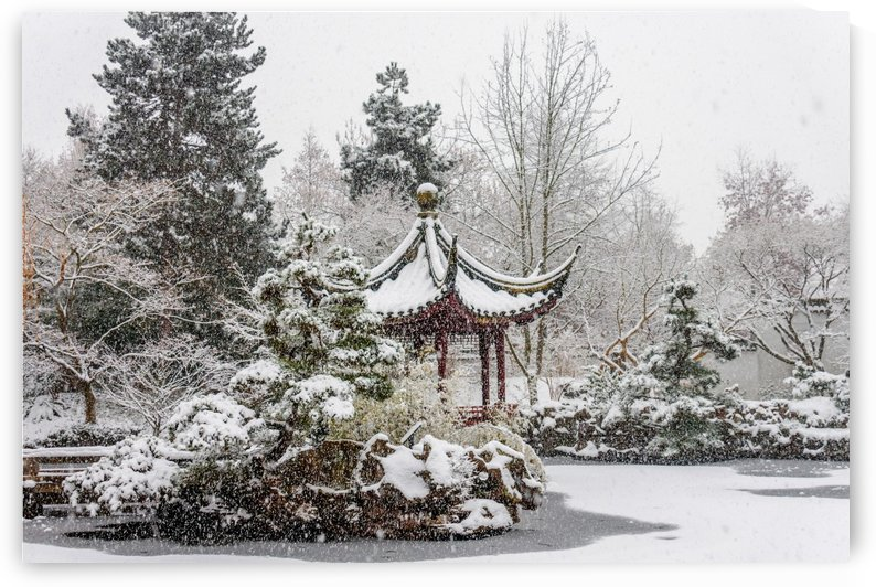 Beautiful, colorful and cold winter in Chinese park with snow and frost by Viktor Birkus