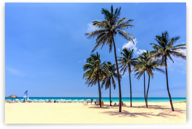 vacation on the beach on the hot Caribbean islands with green palms, yellow sand, blue sky by Viktor Birkus