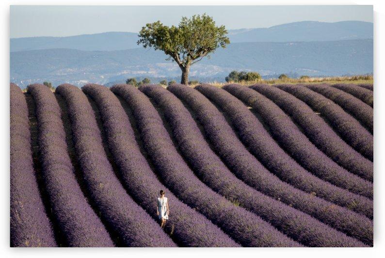 Walking in a lavender field by Pietro Ebner