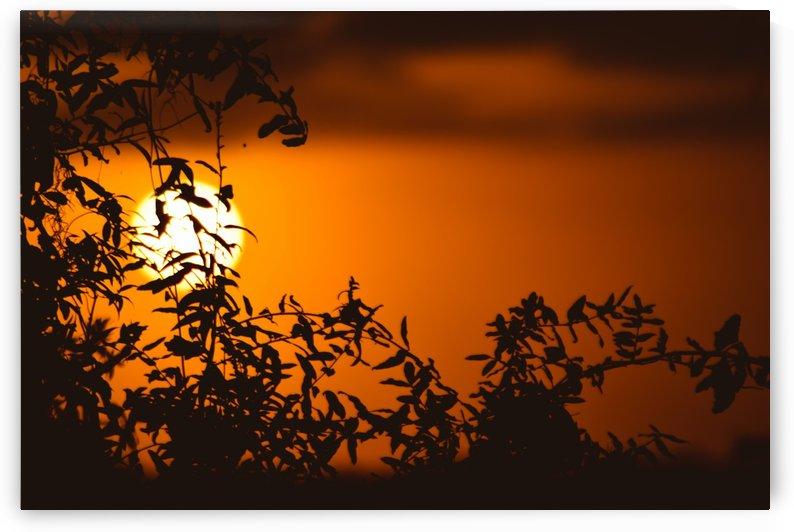 Sunset Shadows by Bradley Strickland