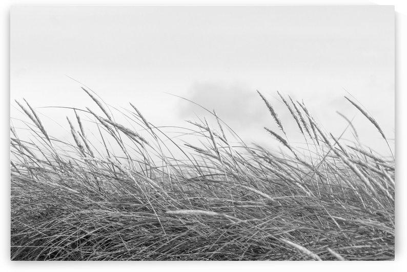 Dunegrass by Kirsten Warner