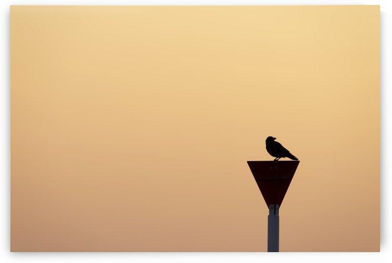 Black Bird by Kirsten Warner