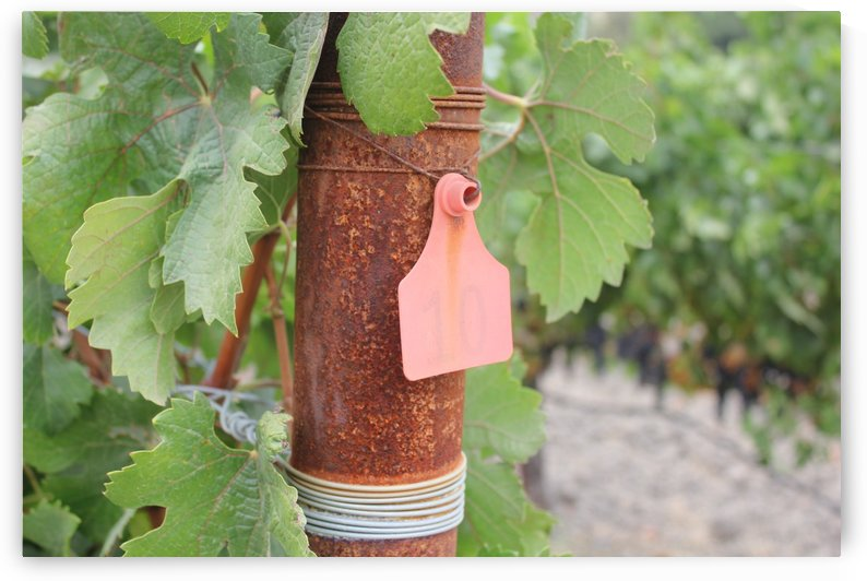Vineyard Tag 02 by Pirate Art Dept  Inc