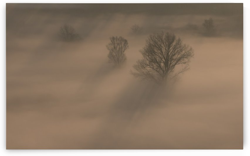 Trees in the morning mist by Pietro Ebner