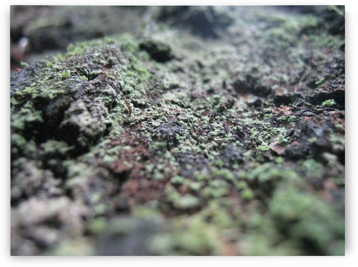 Bark With Lichen 01 by Pirate Art Dept  Inc