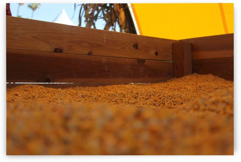 Dried Corn 02 by Pirate Art Dept  Inc