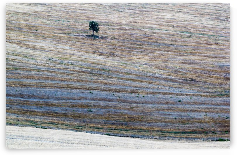 Tree in Val D Orcia by Pietro Ebner