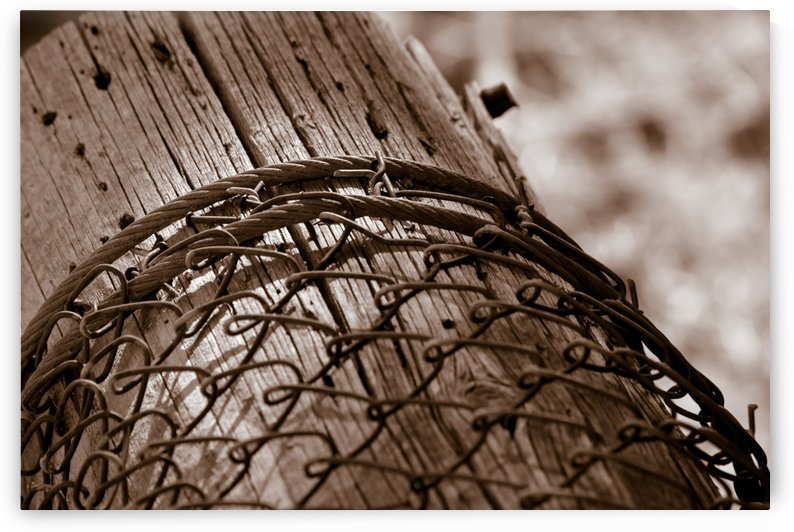 Fallen Fence Post by Leah McPhail