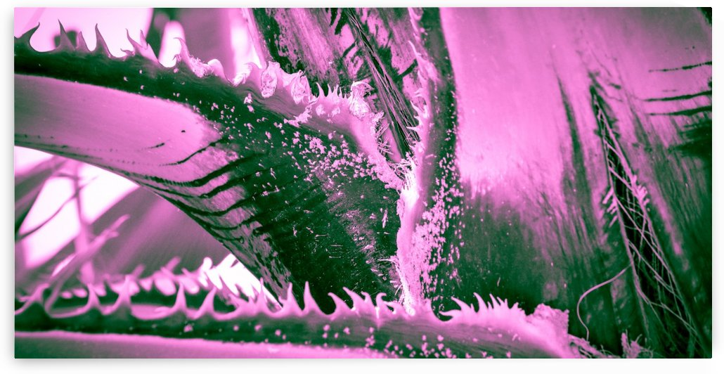 Pink Palm Tigress by Leah McPhail