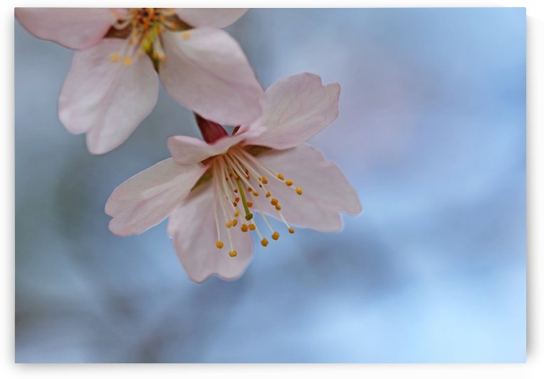 Spring Pastels by Deb Oppermann