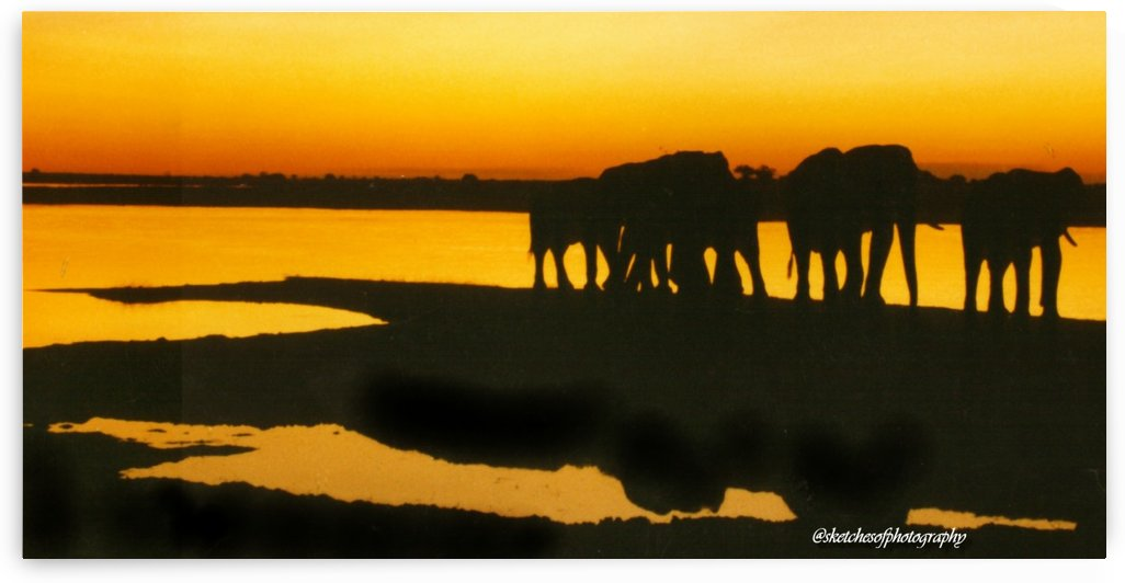 Bots Kasane Elephant sunset 1991 by Eric and Pam Schmidt