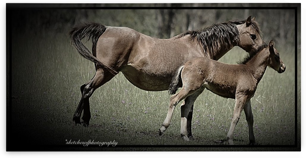 Mare & foal by Eric and Pam Schmidt