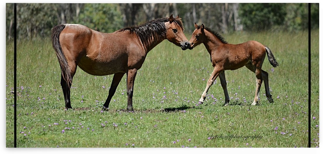 Mare & foal a by Eric and Pam Schmidt