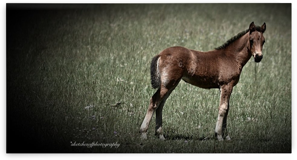 Foal looking by Eric and Pam Schmidt
