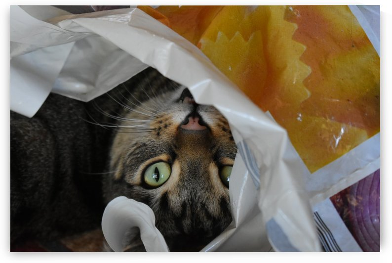 Gizmo - hide in the packet by Eric and Pam Schmidt
