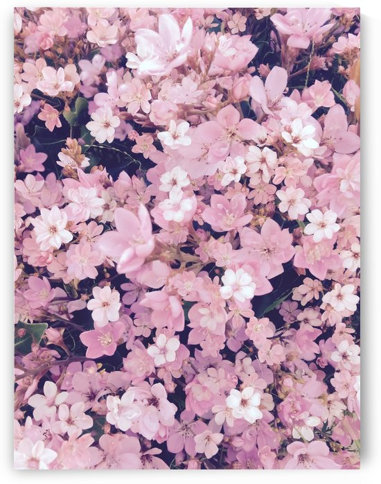 blossom blooming pink flower texture pattern abstract background by TimmyLA