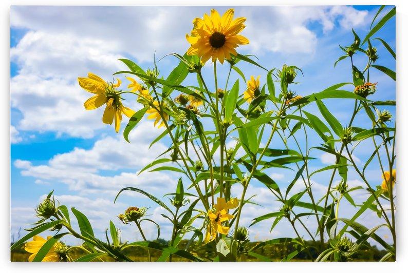 Sunny flower by Megan Hileman