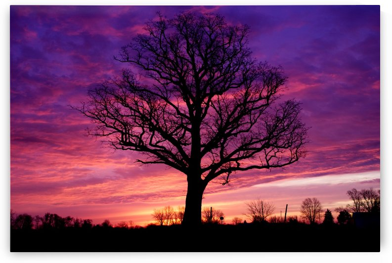 Tree Sunrise by Noah E Geist
