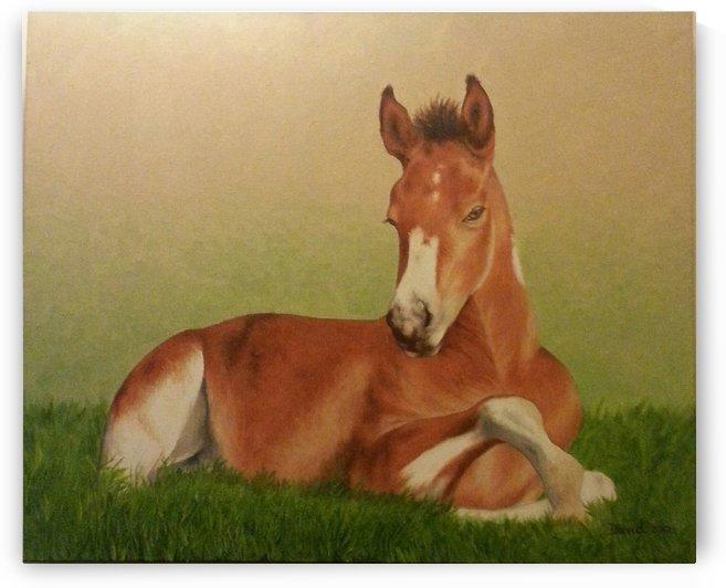 Little horsie by David Drousiotis