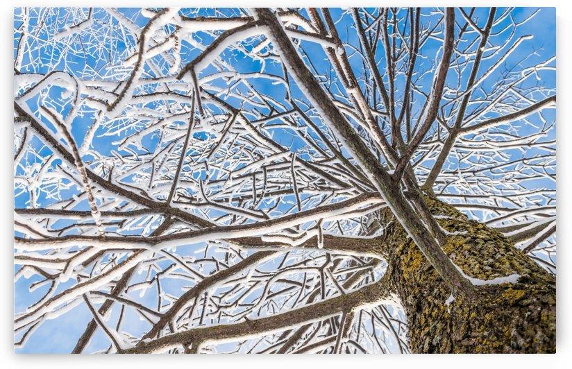Looking up - Regardes plus haut by Carole Ledoux Photography