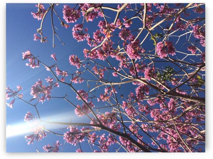 Anime cherry blossom xx by Essicah Aloe