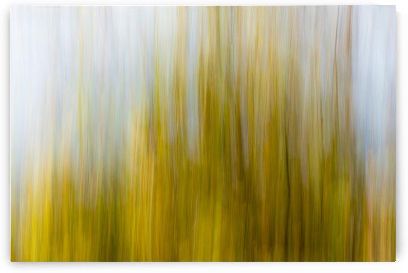 Sea reeds - Roseaux de mer by Carole Ledoux Photography