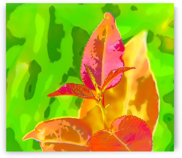 Colourful - Colore by Carole Ledoux Photography