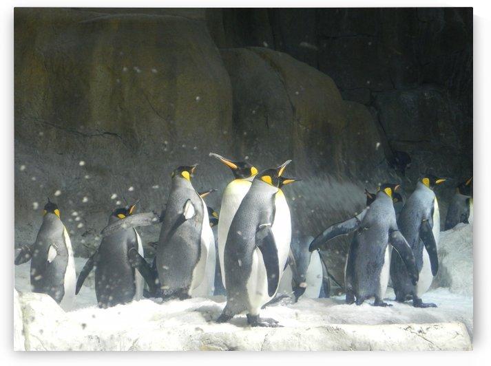 Penguins Few by Nina