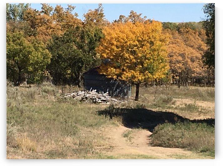 Grain Bin Fall Color by Scott Wheeler