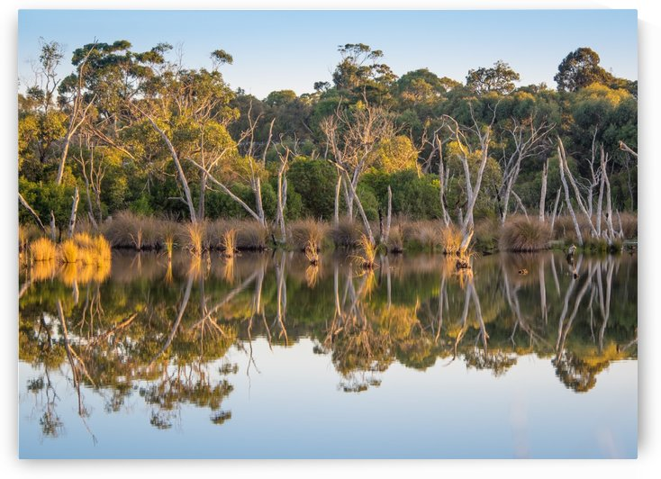 Evening river bank with glassy reflection by Grant Cookson