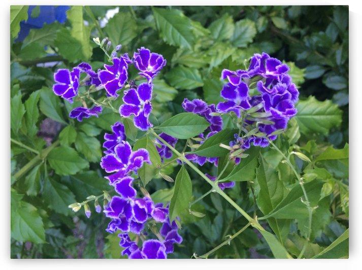 Purple Dragonfly Heaven by Essicah Aloe