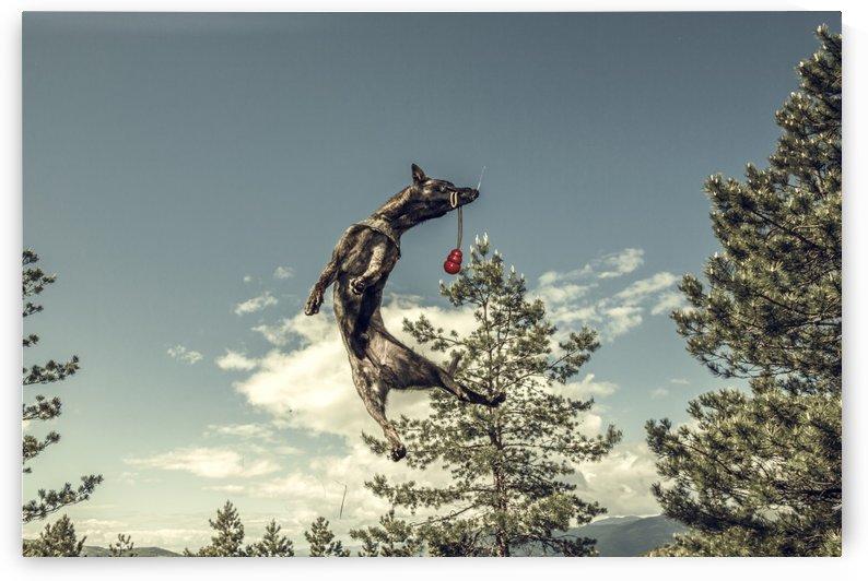 Catch that by Marko Radovanovic