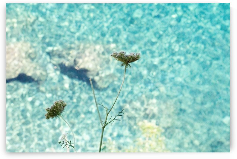 Flowers on the sea by Massimo Russo