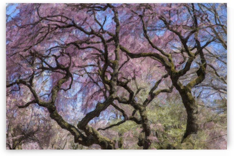 Abstract Cherry Blossom tree by Kaye