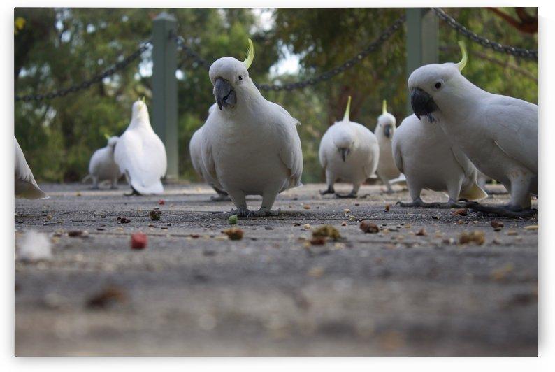 Cockatoos by Elysia Hessler