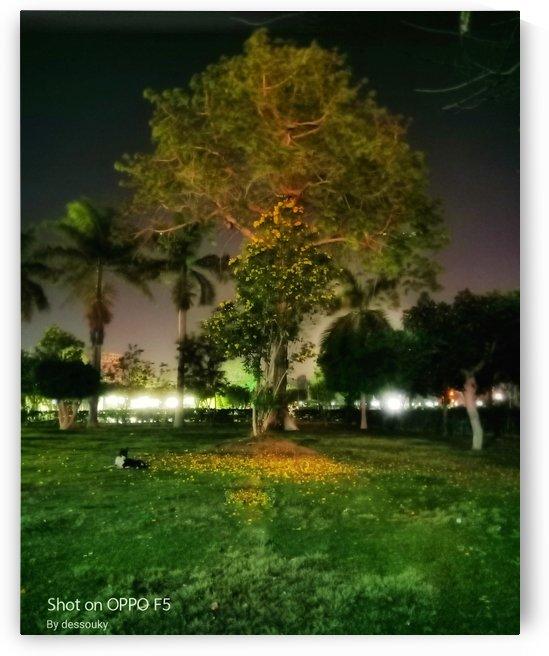 night glory by mohamed ibrahim eldesouki