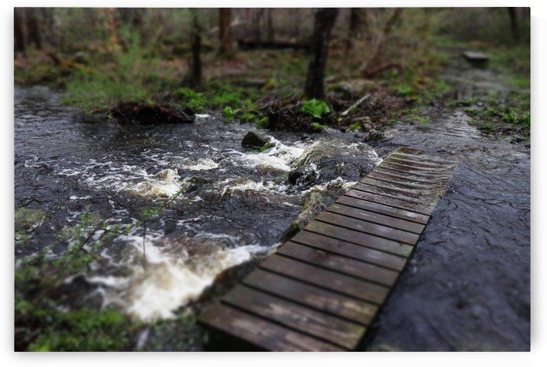 Angelinas Brook by Gilbert Rod