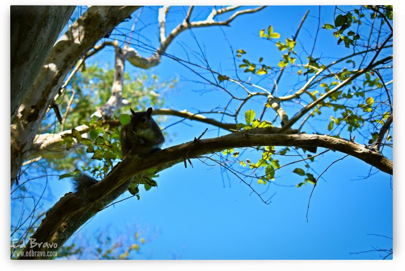 the friendly squirrel 1 3 by Ed Bravo