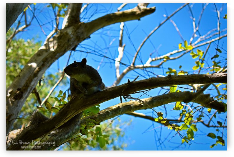the friendly squirrel 3 3 by Eduardo Bravo