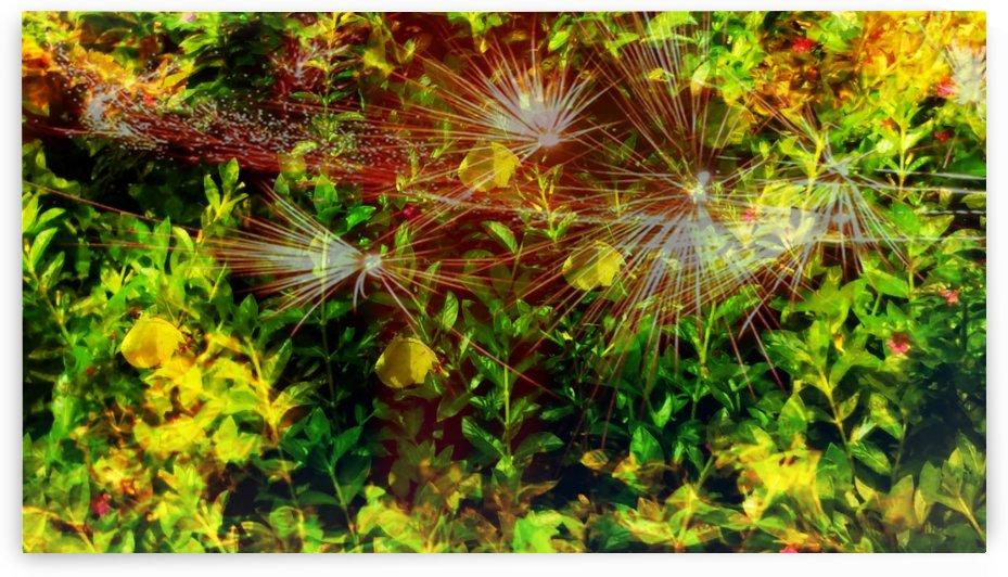 Forest sparkle by Nilu Mishra