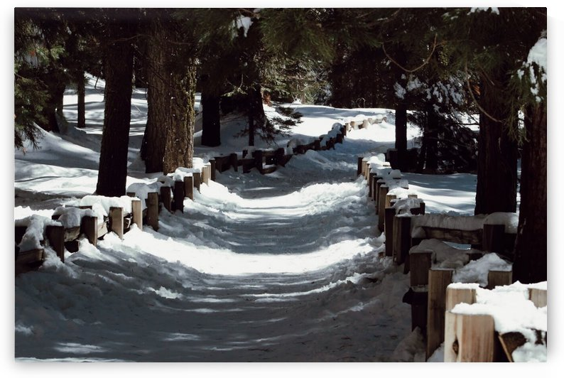 Sequoia Pathway by Morgan Ann Photography