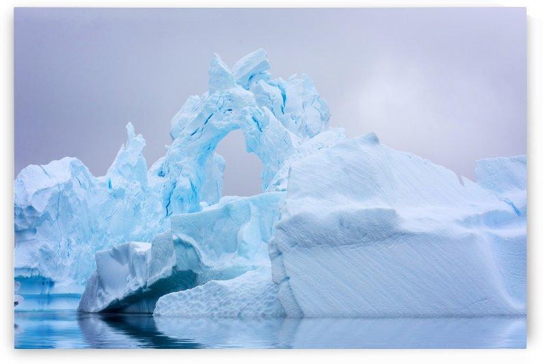 Ice Gardens of Antarctica by L Kourafas