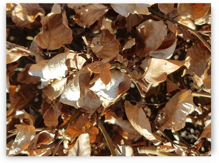 Leaf by Elizabeth Jeffery