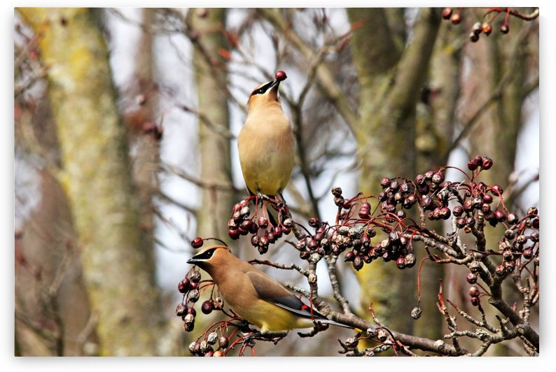 Eating Berries Stem First by Deb Oppermann