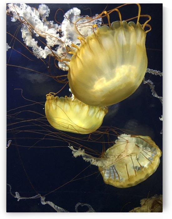 Jellies by Ashden
