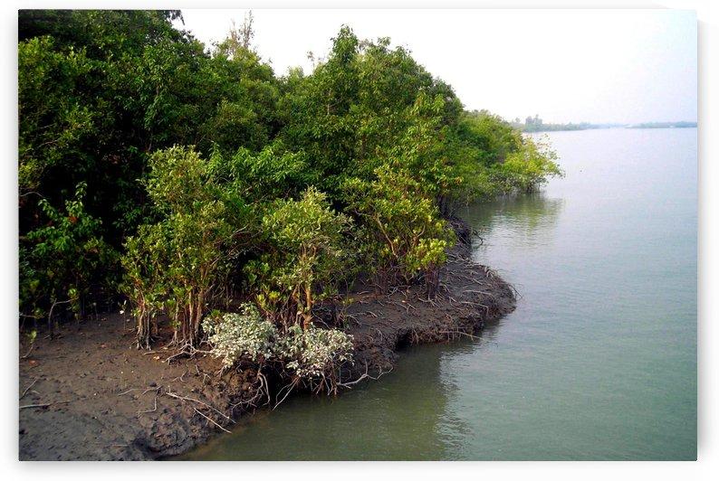MANGROVE  FOREST by MUKTINAVA BARUA CHOWDHURY