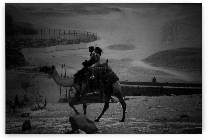 camel ride by mohamed ibrahim eldesouki