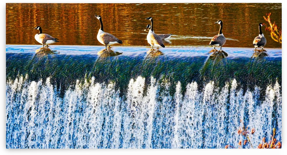 Geese falls by Andy Jamieson