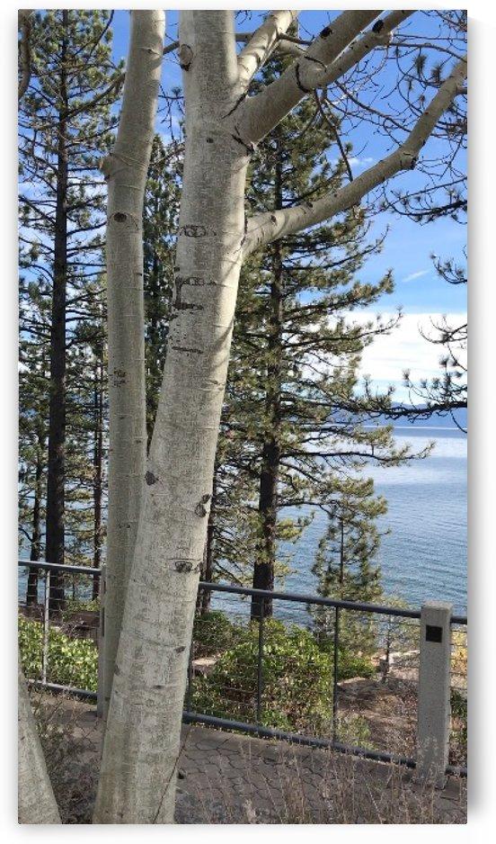 Lake Tahoe by Ashden